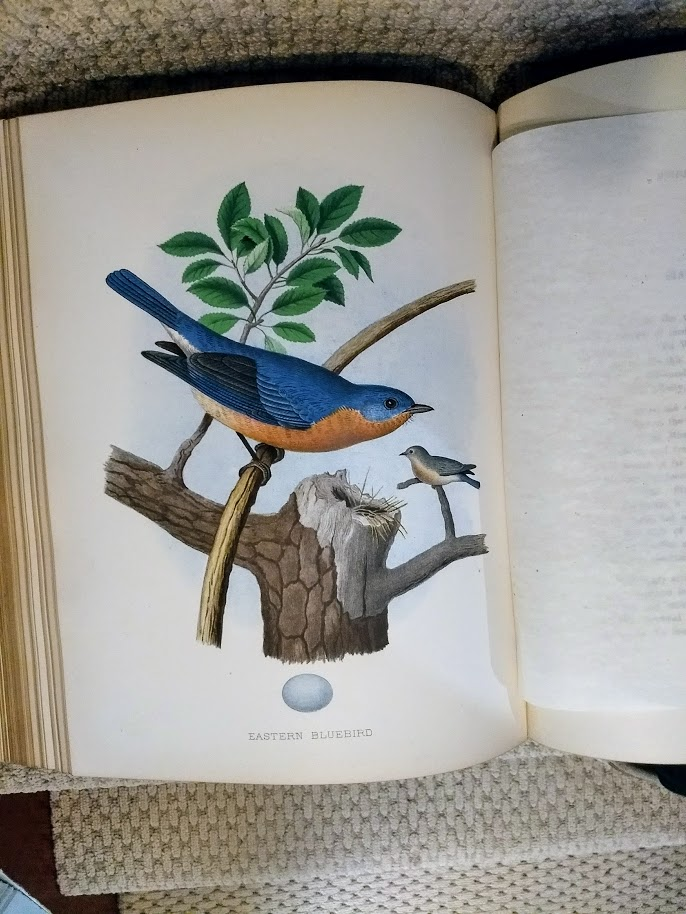 Image for Nests and Eggs, Birds of the United States
